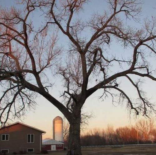 Nature Home Heaven On Earth Cottonwood Tree Home View Peaceful Fall Colors