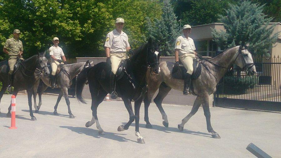 Atlı süvari ( Horse ) First Eyeem Photo