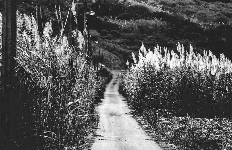 Foot of a mountain in B&W Beauty In Nature Day Grass Growth Nature No People Outdoors Plant The Way Forward Tranquility Tree