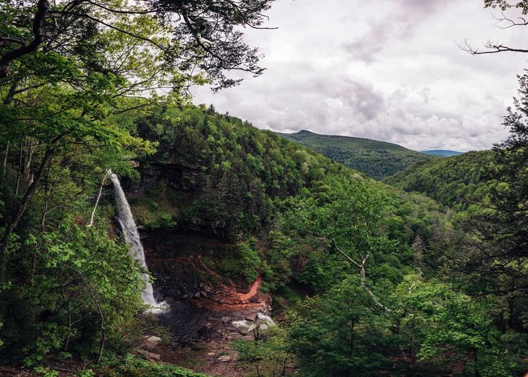 Tree Nature Beauty In Nature Mountain Growth No People Forest Outdoors Green Color Day Sky Tranquil Scene Scenics Tranquility Landscape The Great Outdoors - 2017 EyeEm Awards Kaaterskillfalls New York State Upstate New York The Great Outdoors - 2017 EyeEm Awards Live For The Story