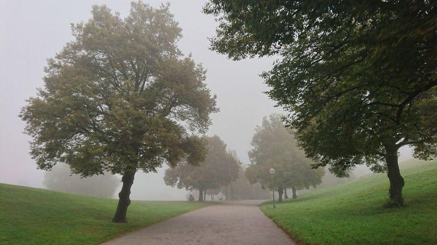 autumn Tree Fog