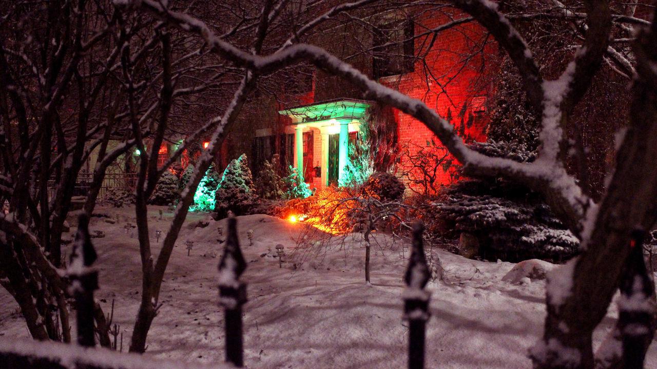 BARE TREES BY ILLUMINATED STREET LIGHT AT NIGHT