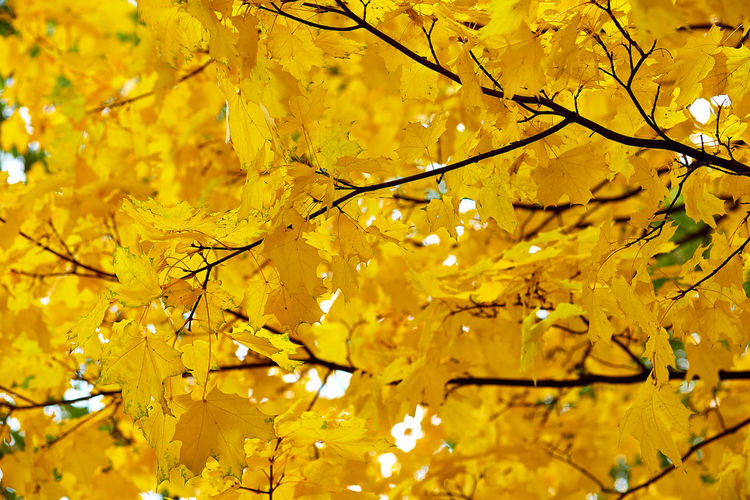 Low angle view of yellow leaves on tree during autumn