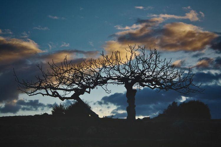Silhouette bare tree against sky