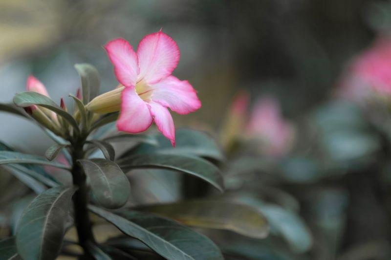 🌸 Plant