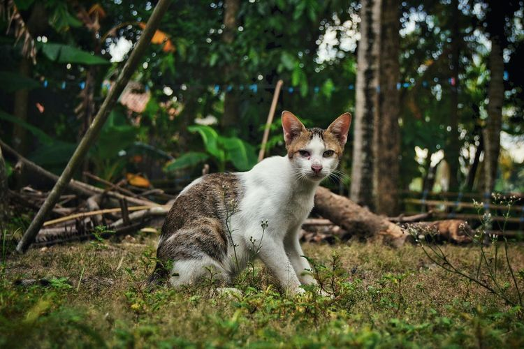 One Animal Animal Themes Domestic Animals Grass Pets No People Feline Wanderlust Ruralphotography Domestic Cat Ruralcat Cat My Photography Nature Outdoors Looking At Camera EyeEmNewHere