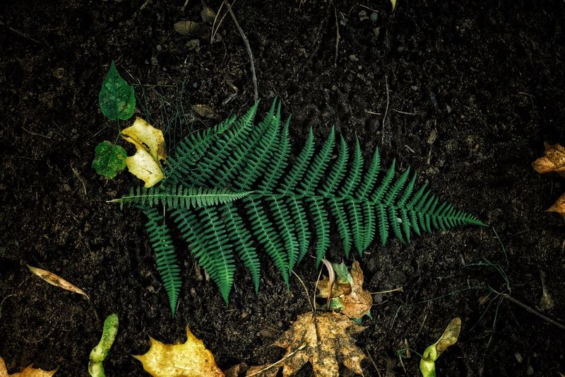 High Angle View No People Leaf Outdoors Night Nature Animals In The Wild Animal Themes Green Macro Forest Dark Alone Forest Photography Fresh On Market 2016