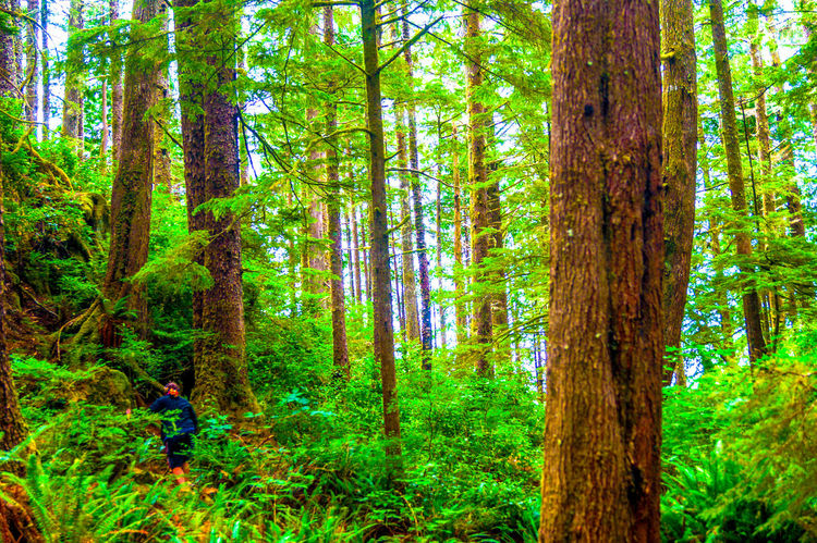 Beauty In Nature Branch Day Forest Grass Green Color Growth Lush Foliage Nature Non-urban Scene Outdoors Plant Scenics Tranquil Scene Tranquility Tree Tree Trunk WoodLand • The Great Outdoors – 2016 EyeEm Awards