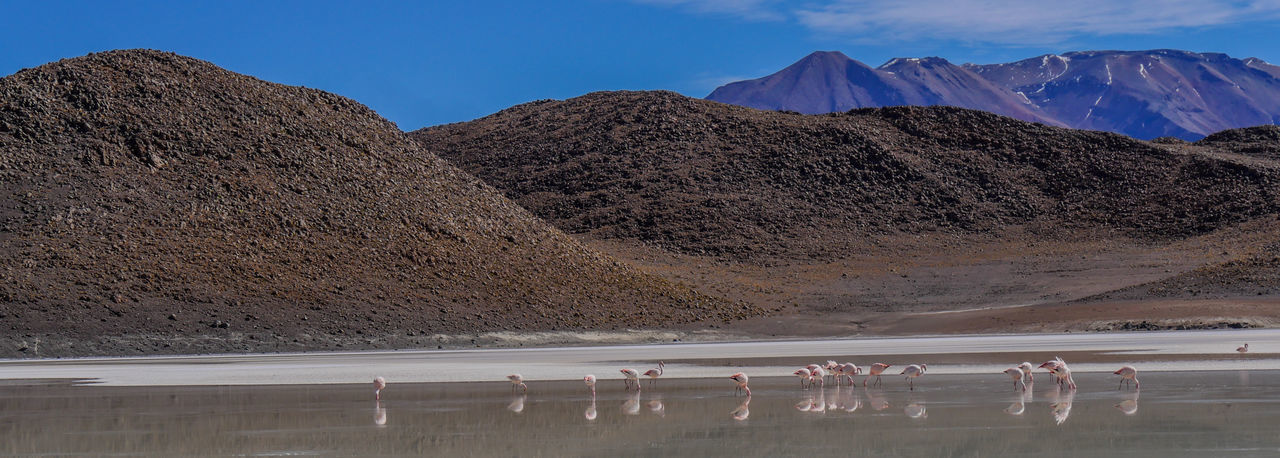 View Of Flamingos Against Mountains Against Sky