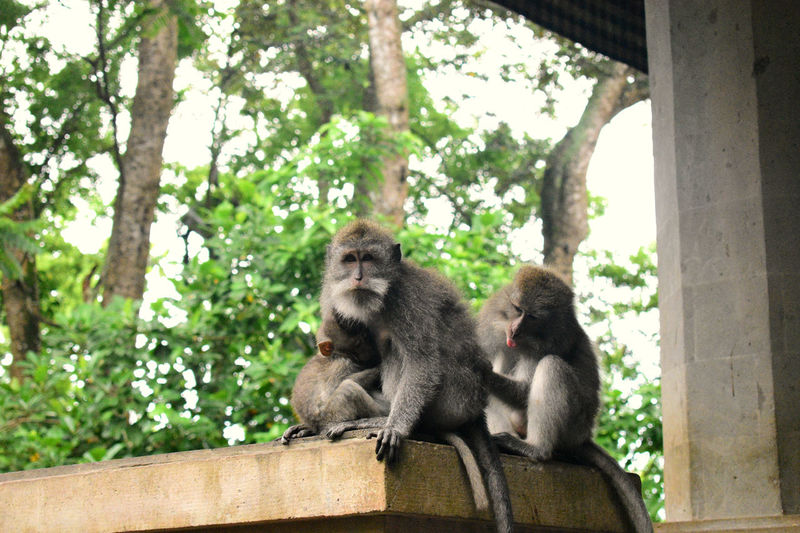 familia de changos Photo Photography Animal Animal Themes Animals In The Wild Animal Wildlife Wildlife Wildlife & Nature My Best Photo My Best Travel Photo Monkey Monkey Forest Tree Baboon Sitting Young Animal Togetherness Ape Animal Family Primate Tropical Rainforest Endangered Species Threatened Species Vulnerable Species Zoo