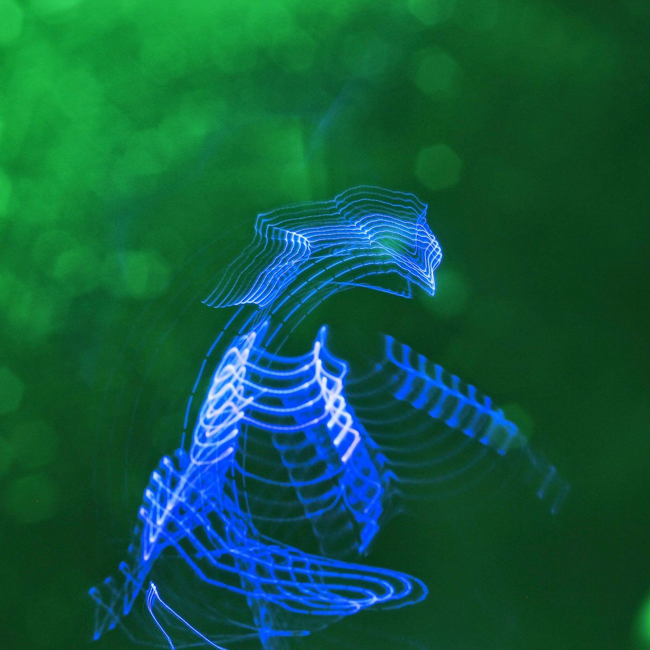 blue, no people, sea life, close-up, water, green color, underwater, swimming, nature, beauty in nature, animal themes, outdoors, undersea, day