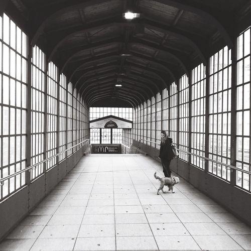 Berlin Streetwalk. Dogs Berlin Streetphotography Zeitgeist Igersberlin Igersberlinofficial