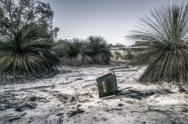A dramatic fall. Aftermath Australia Chair Dramatic Sky Missing Beauty In Nature Bushland Clear Sky Day Desaturated Grain Nature No People Outdoors Palm Tree School Sky Surreal Tranquility Tree Trouble Warzone Mix Yourself A Good Time