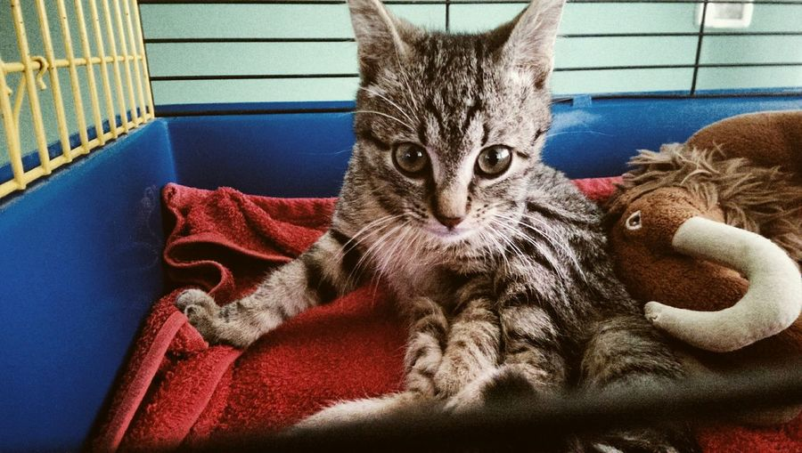 Se non ti arrendi non potrai mai fallireMy Best Photo 2015 Small Cat So Cute Lovely Matisse Hello World Animal Cat Quote Of The Day  Photo Enjoying Life Animal Lover Eyeem Animal Brow Cat Ice Age Character