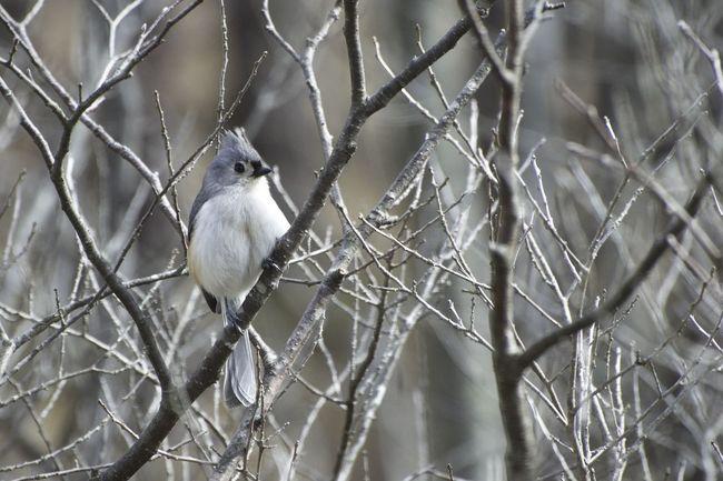 Spring D5500 One Animal Animal Animal Themes Animal Wildlife Vertebrate Bird Animals In The Wild