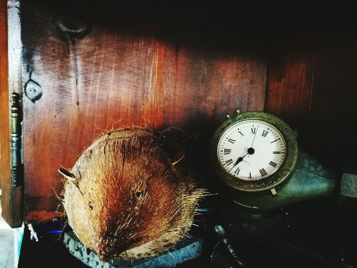 Recyclage d'une noix de coco 🌴 Ti tangue Recycle EyeEm Best Shots EyeEm Gallery Tangue Hérisson DIY Vintage #coconut Recyclage Decoration 974 Iledelareunion Indoors  Time Close-up No People The Still Life Photographer - 2018 EyeEm Awards