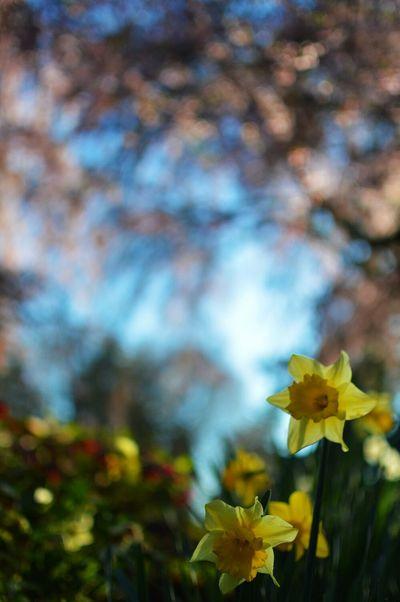 The sun behind us. Pantone Colors By GIZMON Flowerporn Colors Yellow Flower