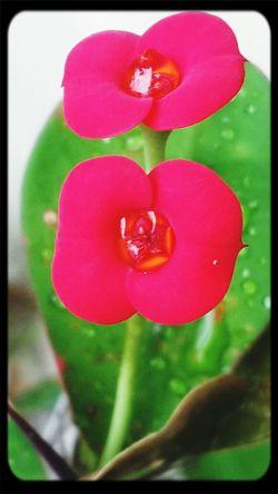 Flowers Beautiful Flowers EyeEm Nature Lover Mizz Nunuy
