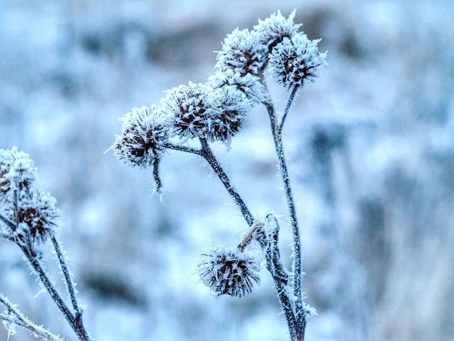 Nature Beauty Iced Winter Nature Day Frozen Nature Shades Of Winter Cold Weather Beautiful Nature Snow Covered Nature Winter Snow Focus On Foreground Close-up Day No People Plant Outdoors Fragility Cold Temperature Branch Tree Beauty In Nature Snowflake Sky