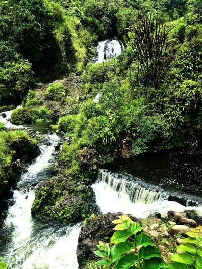 Waterfalls Green Color No People High Angle View Day Outdoors Water Beauty In Nature Tranquility Backgrounds Leaf Grass Sunlight Land First Eyeem Photo
