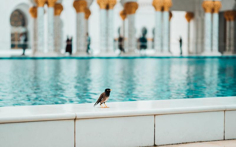 Bird perching on swimming pool