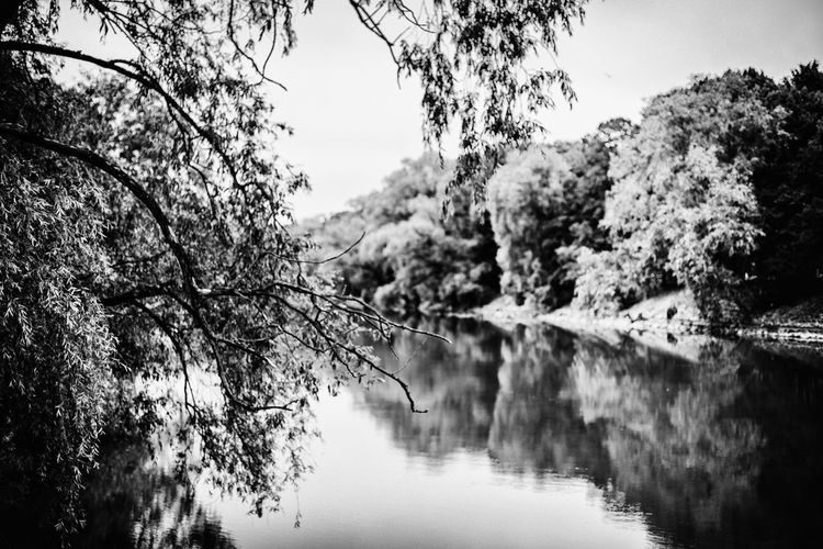 Along the Emajõgi river bank Estonia Estonian Landscape River View Riverside Tartu Trees Along The River Bank  Beauty In Nature Blackandwhite Branch Day Emajõgi Monochrome Nature No People Plant Reflection River Scenics - Nature Sky Tranquil Scene Tranquility Tree Water