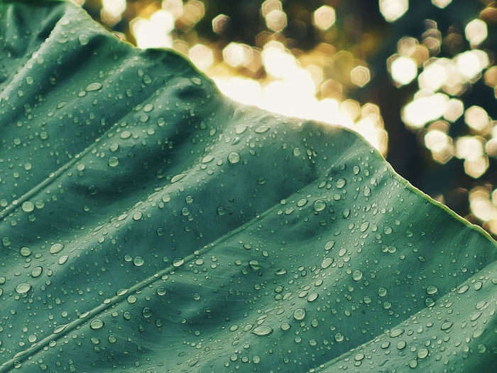 dew on leaf Beauty In Nature Close-up Day Drop Fragility Freshness Green Color Leaf Nature No People Outdoors Purity RainDrop Water Wet