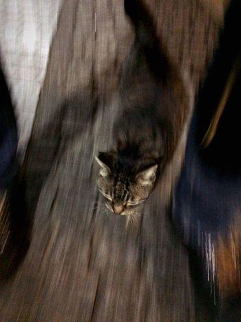 夜ねこ 走り猫 キジトラ Stray Cat 野良猫