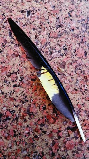 Feather  Imagination by FeBird Last Days Of 2015 after lunch with AFMA fellows and families