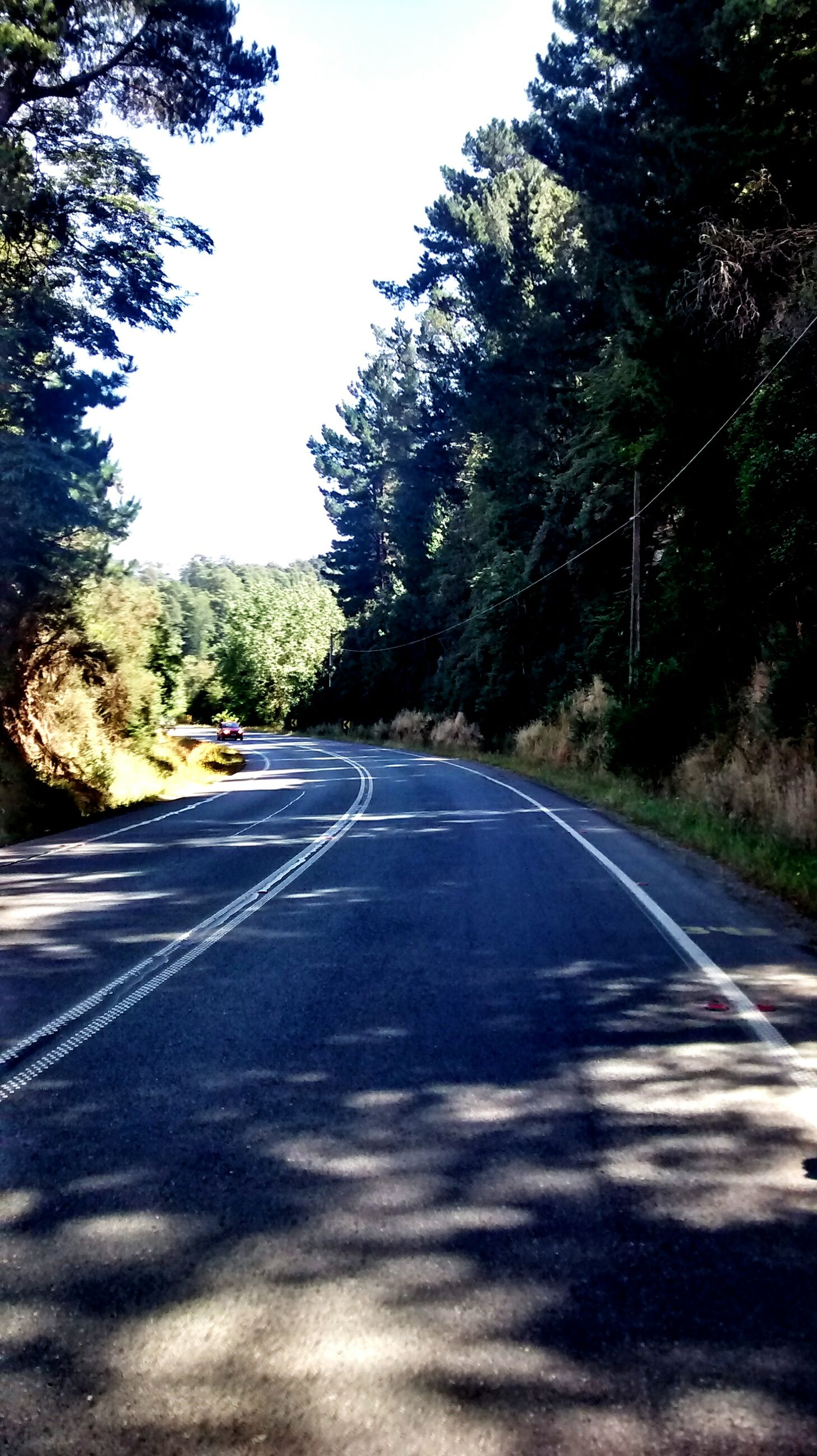 the way forward, transportation, road, road marking, tree, diminishing perspective, vanishing point, country road, asphalt, empty road, empty, street, sky, tranquility, dividing line, long, double yellow line, clear sky, day, nature