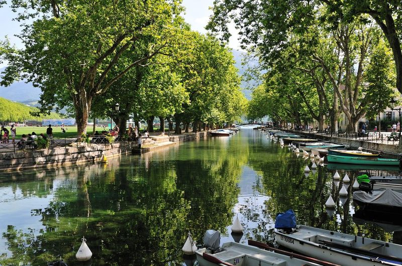 Scenic view of lake by trees in city
