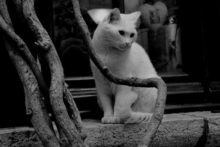 Animal Themes Class Day Feline Pets Portrait Portraits Pose Poser