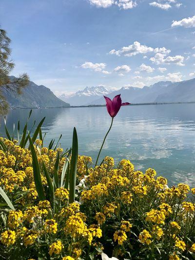 Flowers blooming by lake against sky