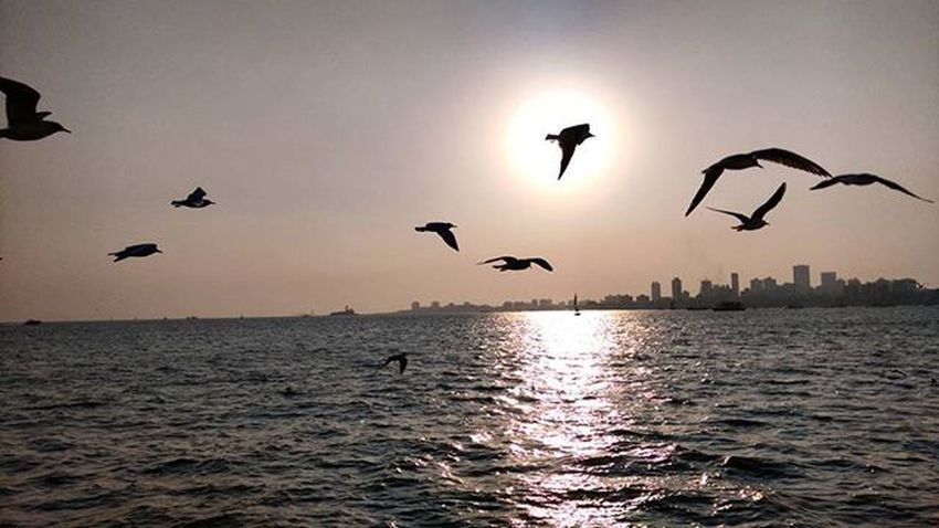 Randomclick Gateway Colaba Mumbai Boatride Evening Click Birds Sunset 😃😊😍📷🚤🌊🌄