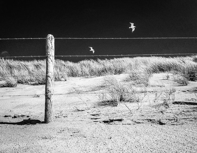 Perfekt Moment Moment Posing Beautiful Day Day Beauty In Nature Nature You And Me Seite An Seite Scenics Scenery Travel Blackandwhite Blackandwhite Photography Eeyem Photography Enjoying Life EyeEm Best Shots Landscape No People Outdoors Bird Flying Beach Sand Sky Seagull