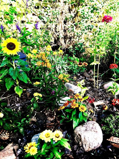 Flower Nature Plant Growth Outdoors Beauty In Nature Day No People Fragility Yellow Flowerbed Freshness Flower Head Close-up Garden Garden Photography Garden Flowers Garden Love Plant Nature Beauty In Nature Blooming Green