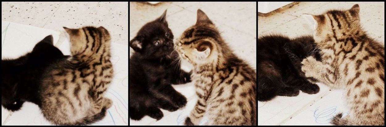 Animals Kittys  First Eyeem Photo