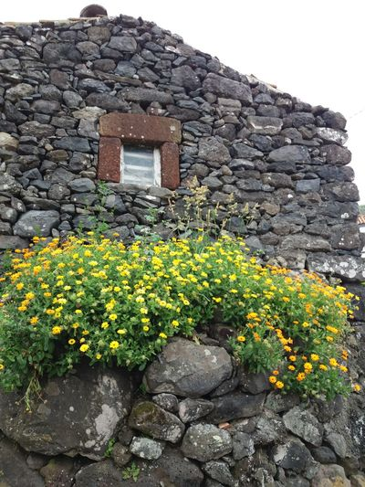 Faja Grande.. Ilha das Flores Açores House Building Exterior Architecture Flower Built Structure History Stone Material Outdoors No People Growth Nature Plant Rural Scene Day Hello World ✌ Hello Talking Photo 35 Vukcevic Hello EyeEm
