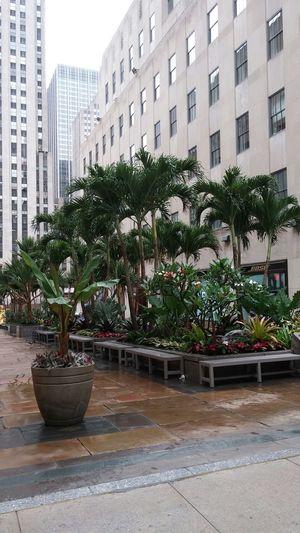 Palm Island... Rockafellar Center Palm Trees Exotic Flowers Newyorkcity Discover Your City