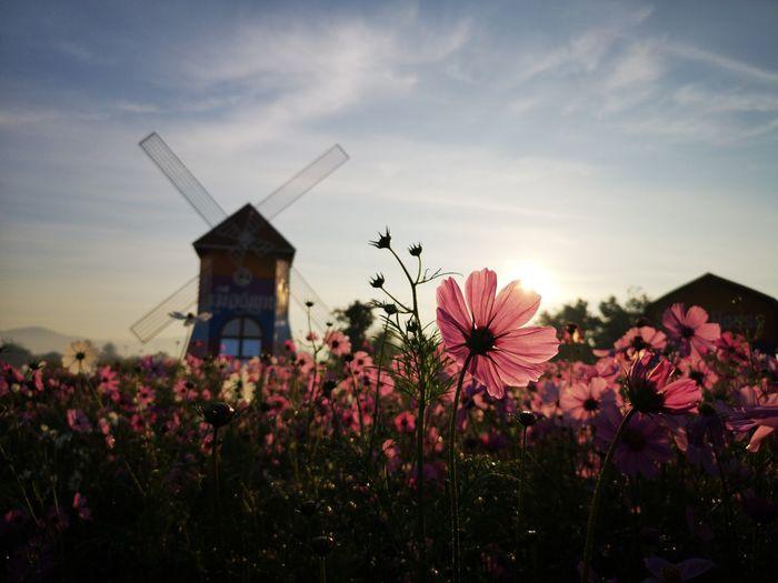 View of flowering plants against sky