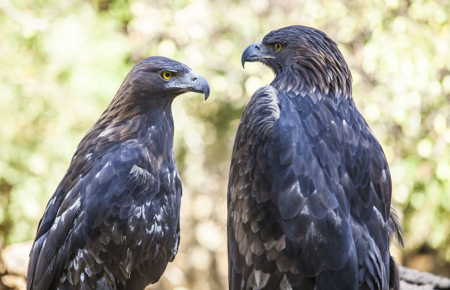 50+ Eagle Pictures HD   Download Authentic Images on EyeEm