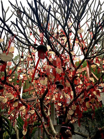 Chinese Wishing Tree at Phoenix Mountain in Baoan - Shenzhen, China Wishes Phoenix Mountain China Traditionally Chinese Chinese Hanging Wishing Tree Chinese Culture Traditional Culture BaoAn Temple Chinese Style Traditional Chinese Wish Tree Buddhist Temple Mountain Buddhism Shenzhen Chinese Cultural Celebrations Tree