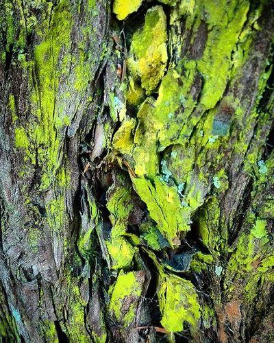 Tree Bark Wooden_hue Yellow Pocket_trees Natureromantix Tt_rt_nature Rebelsunited_nature Birds_bees_flowers_n_trees Rsa_nature Rsa_trees Global_nature_greens_december Universalviews Ig_masterpiece