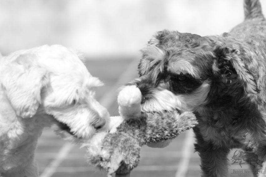 Dogslife Fun Playin