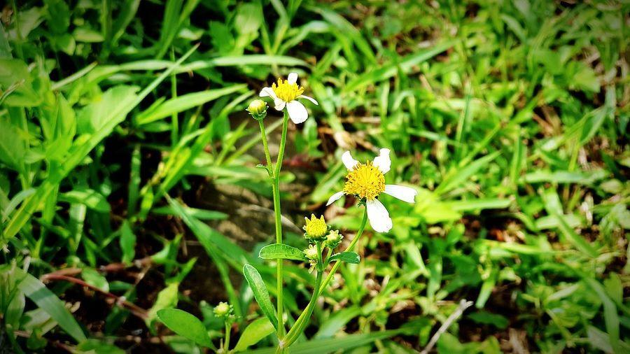 wild flowers in