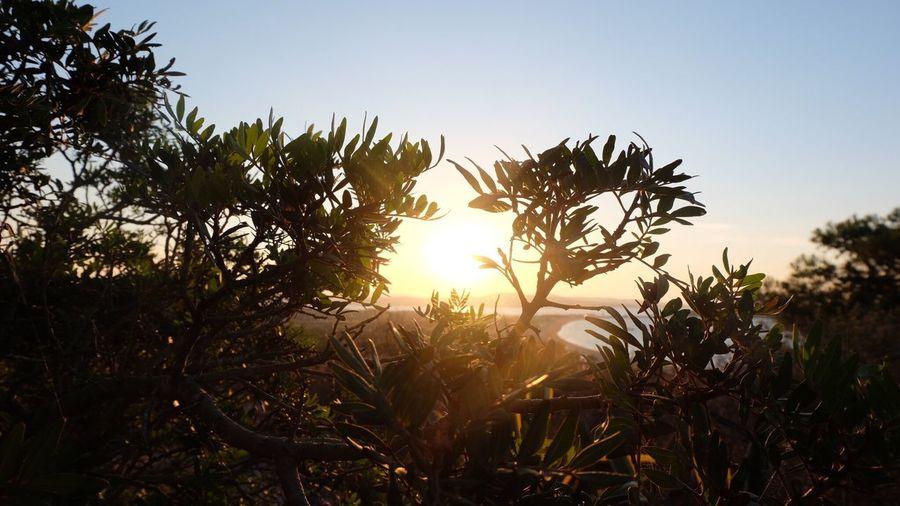 Tree Nature Sunlight Beauty In Nature Day Sky Sunset Outdoors Clear Sky Plant Italy Sardinia Sardegna Costa Smeralda