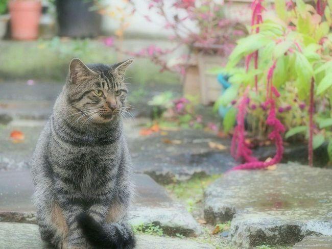 雨上がりにお散歩にゃんこ… 猫ぽとれ ノラ猫 にゃんこ さんぽ ℃-ute Cat One Animal Domestic Cat Nature EyeEm Gallery EyeEm Best Shots