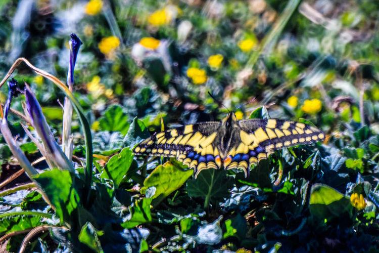 Flora Abejas