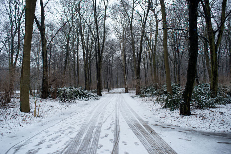 Beauty In Nature Berlin City City Life Cold Temperature Europe Forest Garden Landscape Nature Outdoors Snow Strees Streetphotography Tree Tree Trees Winter Winter