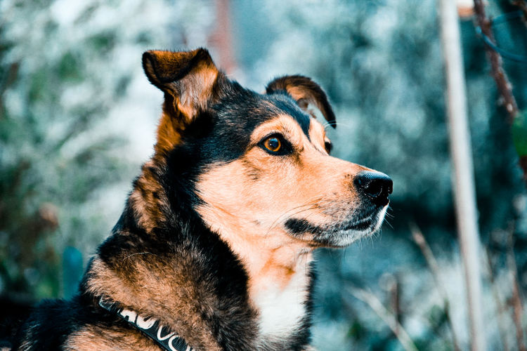 One Animal Animal Themes Pets Dog Looking Away No People Outdoors Day Nature Dackelmix Husky Fotografie EyeEm Best Shots Canon Hobby Cold Temperature Winter Garten